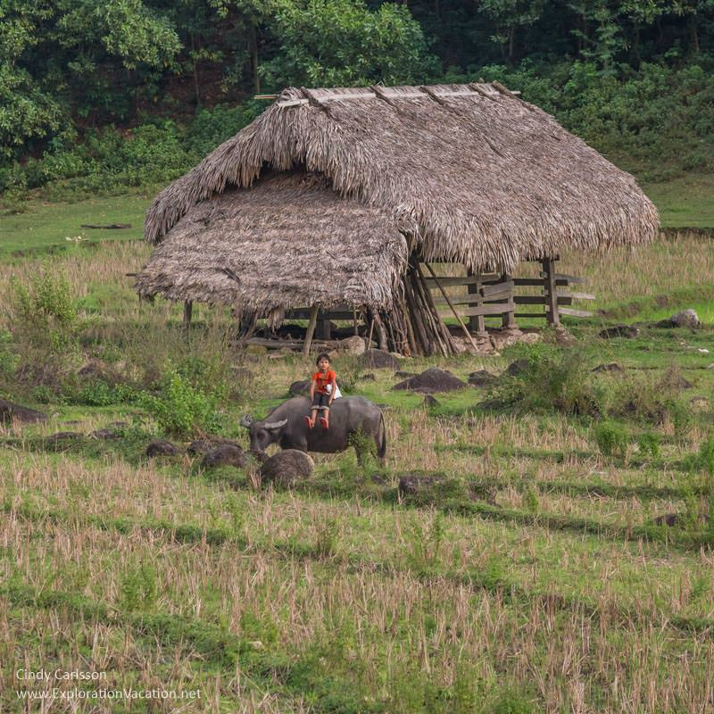 Child on a water buffalo in #Vietnam - ExplorationVacation #asia