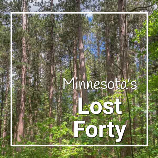 """pine forest with text """"Minnesota's Lost Forty"""""""