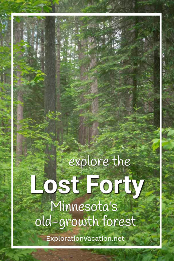 """pine forest with text """"explore Minnesota's Lost Forty"""""""
