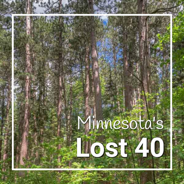 """pine forest with text """"Minnesota's Lost 40"""""""