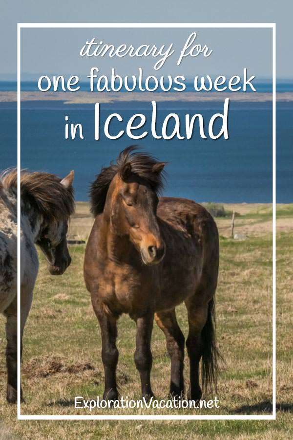 "Icelandic horses with text ""Itinerary for a fabulous week in Iceland"""