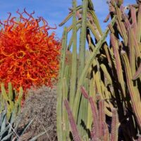 large red/orange glass sculpture with cacti