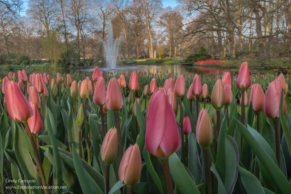 rose and peach tulips in the foreground with a fountain and landscaped grounds in the background