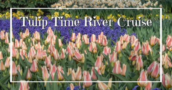 """purple hyacinth, colorful tulips, and white daffodils with text """"Tulip Time River Cruise"""""""