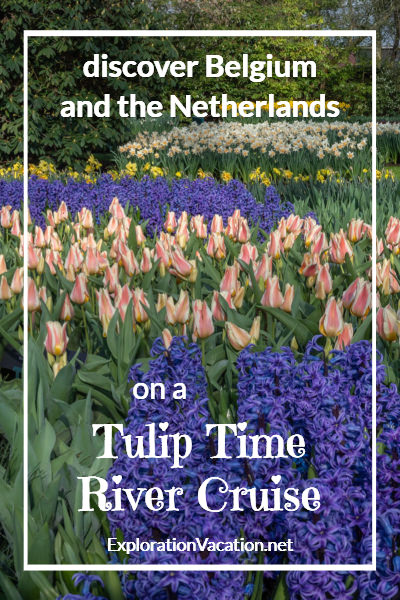 "purple hyacinth, colorful tulips, and white daffodils with text""Belgium and the Netherlands on a Tulip Time River Cruise"