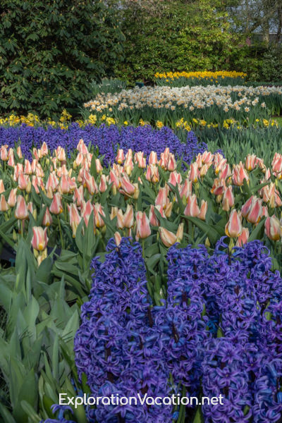 purple hyacinth, colorful tulips, and white daffodils