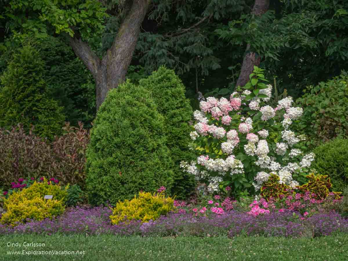 border garden with shrubs, hydrangea, and other flowers