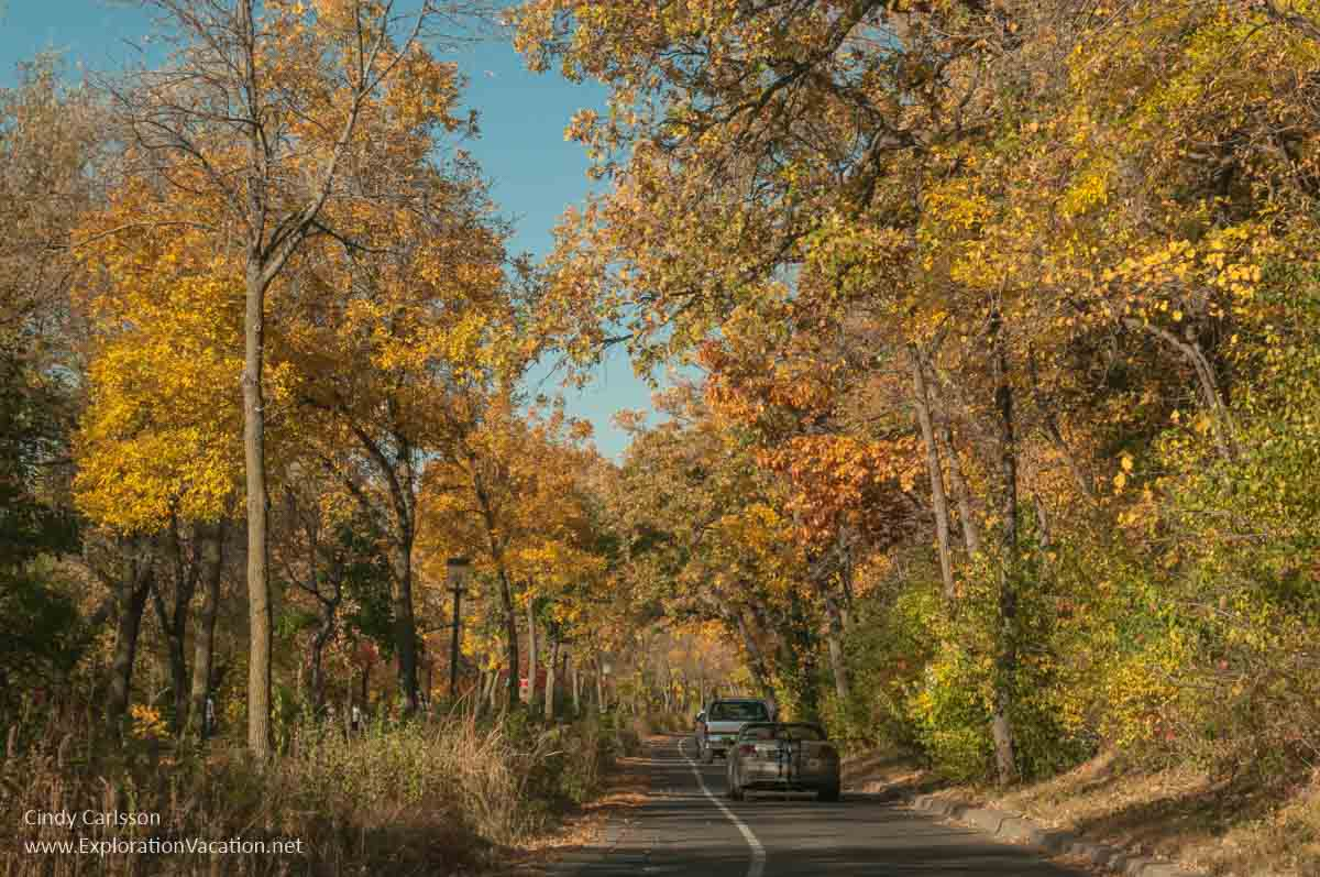 car driving down road below trees with golden leaves