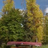 Canoes by trees near Lake Bemidji
