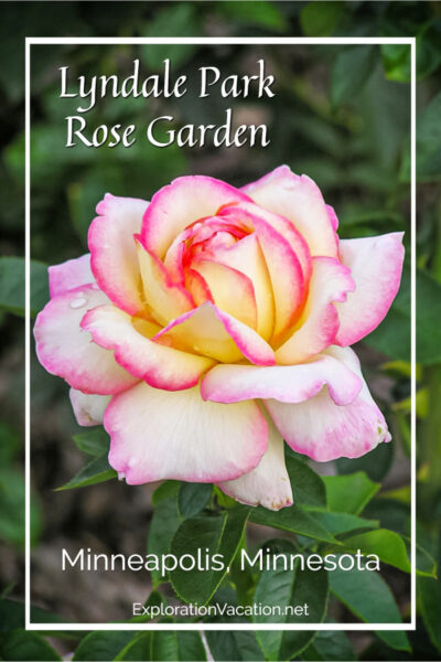 "Pink rose with text ""Lyndale Park Rose Garden"""