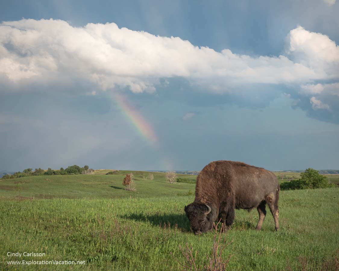 grasslands with buffalo and rainbows