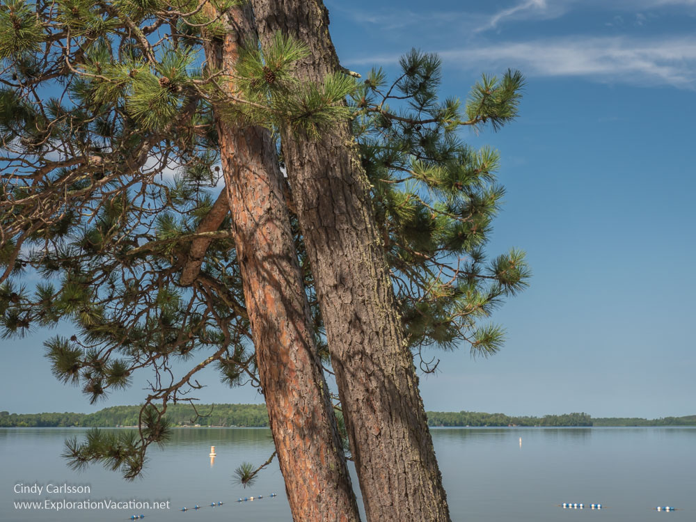 pine tree with lake behind it