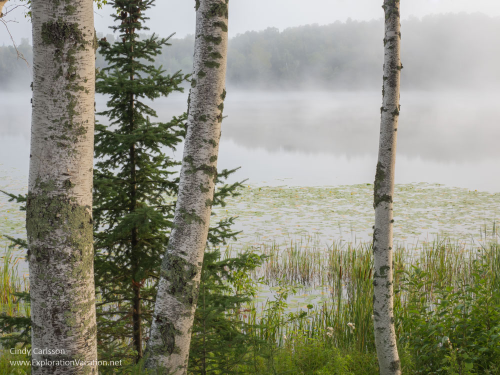 trees framing a lake with morning fog