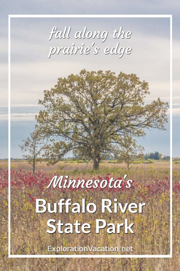 "Oak tree and prairie in fall with text ""Minnesota's Buffalo River State Park"""