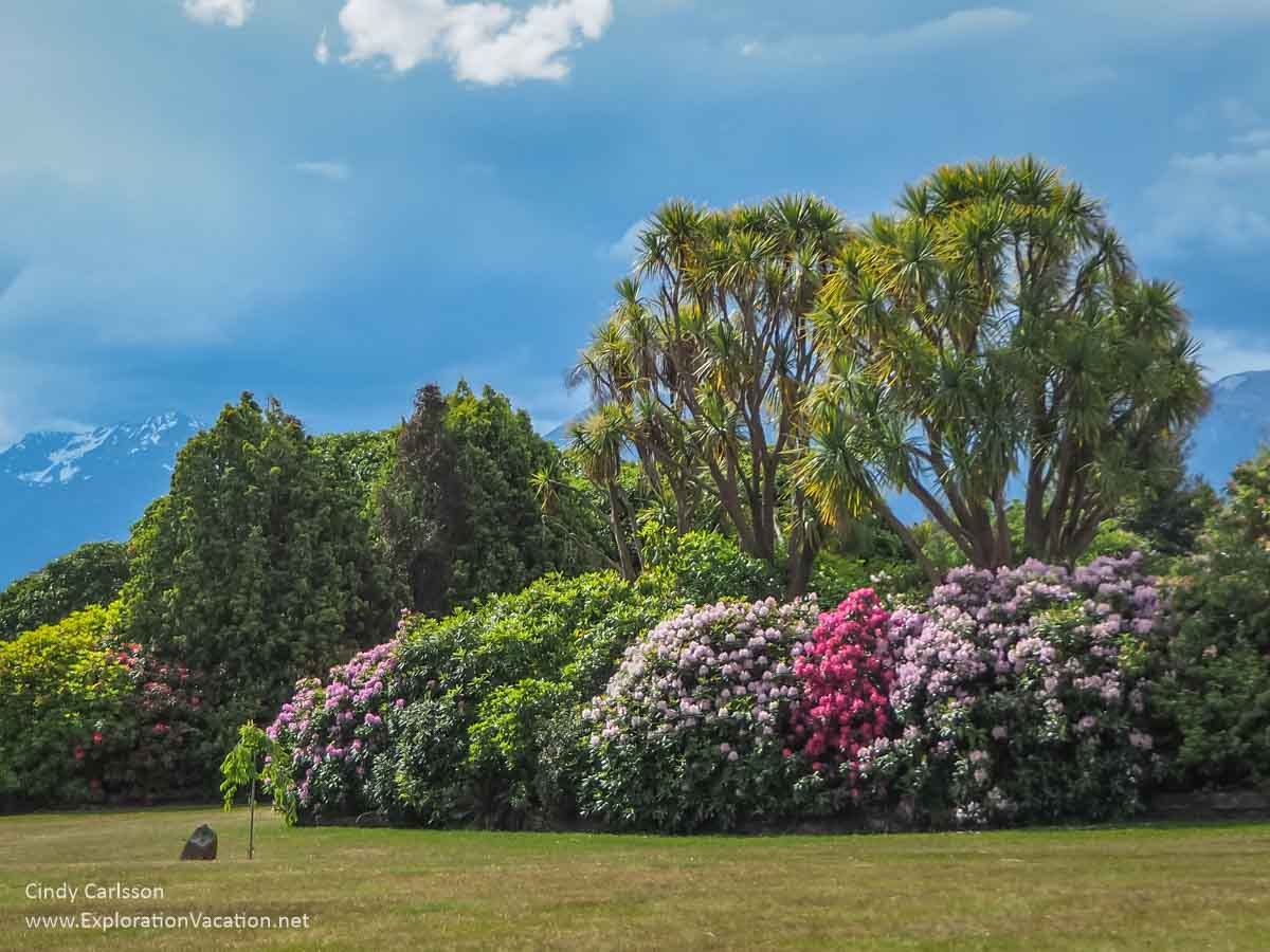 rhododendrons in bloom in a public park