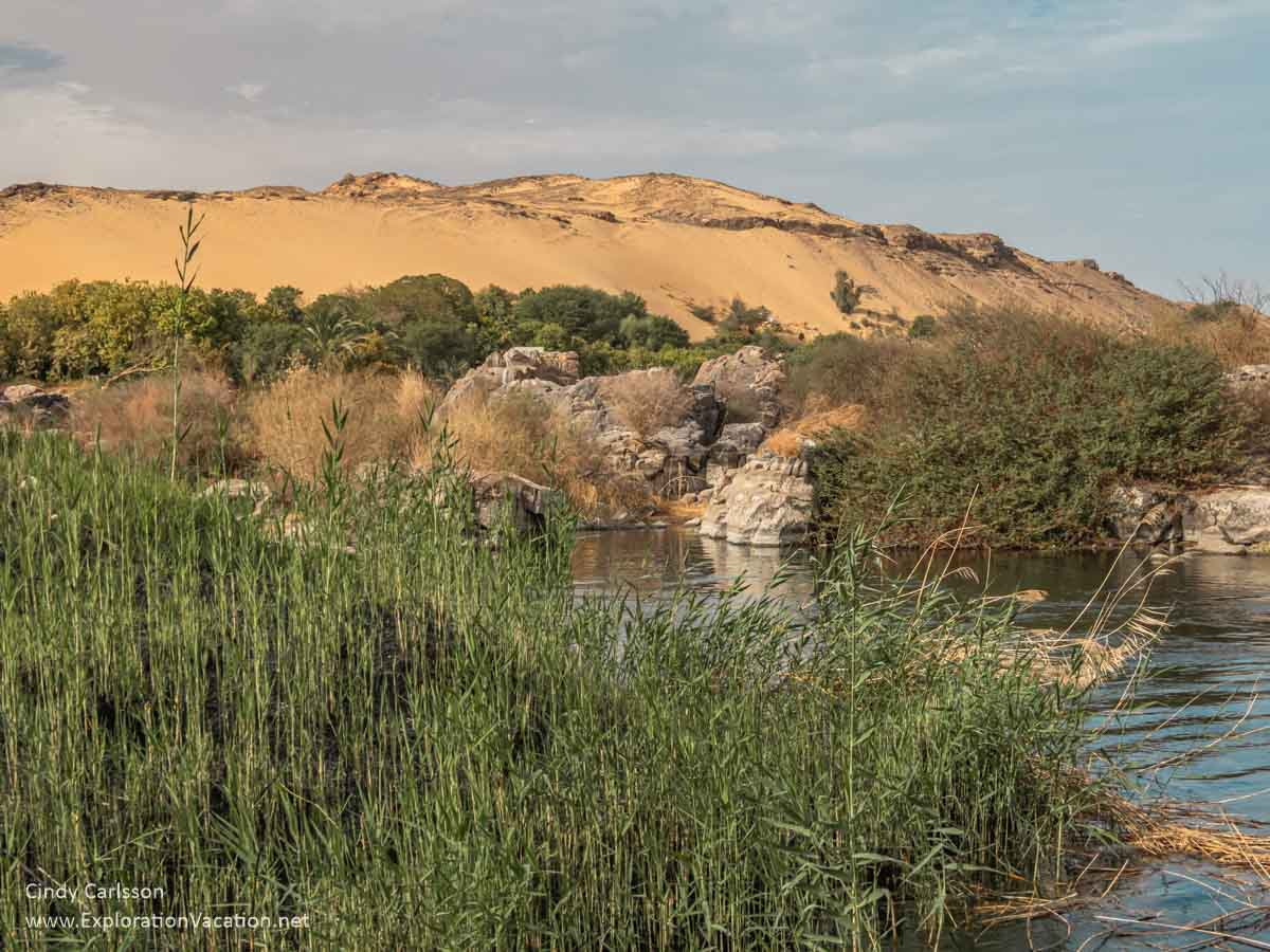 green vegetation along a rocky river channel with golden sand dunes behind