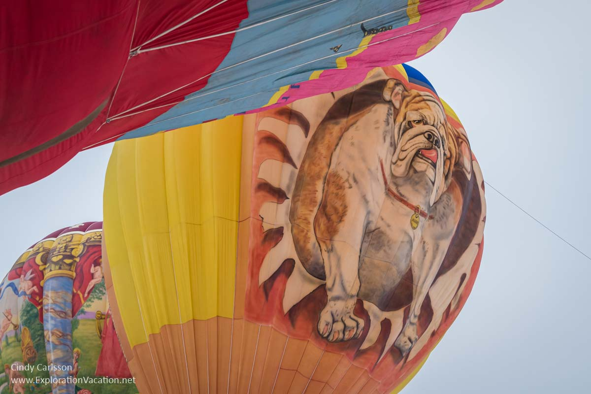Hot air balloon with a bulldog