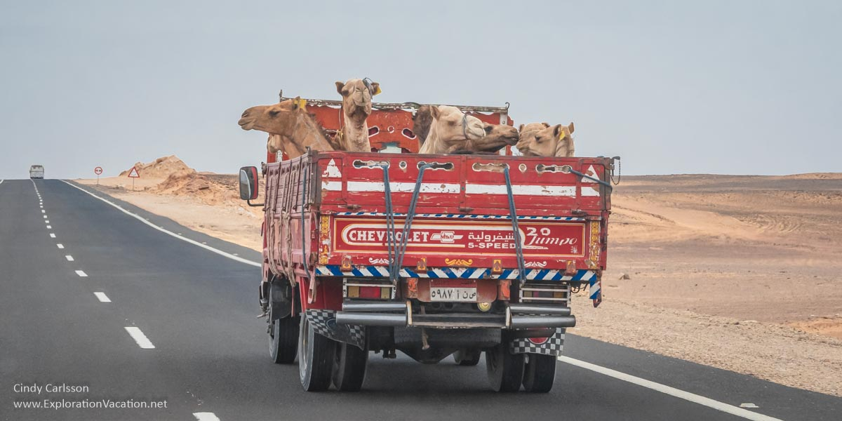 colorful truck with camels in the back