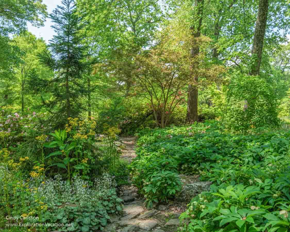 woodland path with shrubs and trees