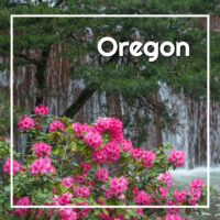 "flowers by a fountain with text ""Oregon"""