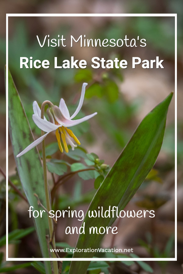 single white trout lily blossom with leaves and text