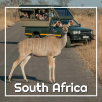 "Kudu in road with a safari truck with text ""South Africa"""