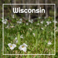 "trillium flowers with text ""Wisconsin"""