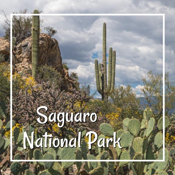 "saguaros and rocky outcrop with text ""Saguaro National Park"""