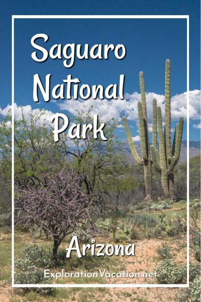 """desert with saguaro cacti and text """"Saguaro National Park, Arizona"""""""