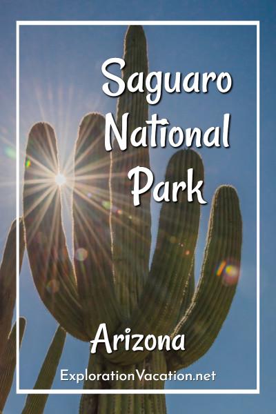 """saguaro with sun through its arms """"Saguaro National Park, Arizona"""""""