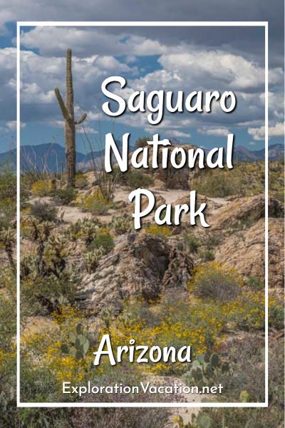 """saguaro on a rock outcrop and text """"Saguaro National Park, Arizona"""""""