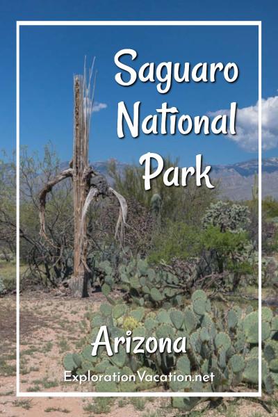 "Saguaro skeleton with text ""Saguaro National Park Arizona"""
