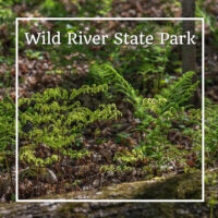 "early spring ferns with text ""Wild River State Park"""