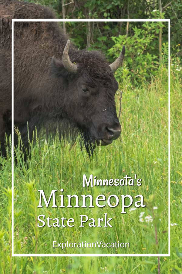 "close-up of a bison in grass with text ""Minnesota's Minneopa State Park"""