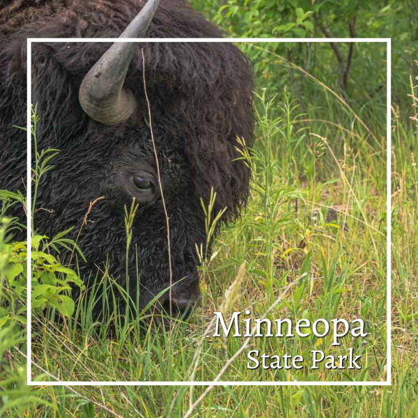 """close-up of a buffalo with text """"Minneopa State Park"""""""