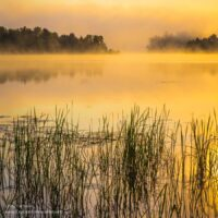 golden foggy sunrise over a lake