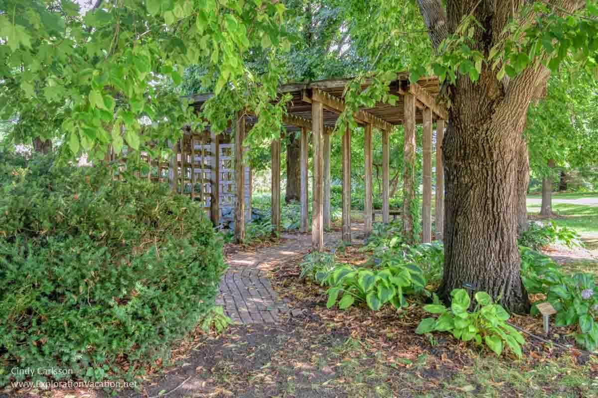 shaded hosta garden