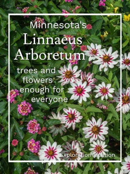 """zinnia blossoms with text """"Minnesota's Linnaeus Arboretum"""""""