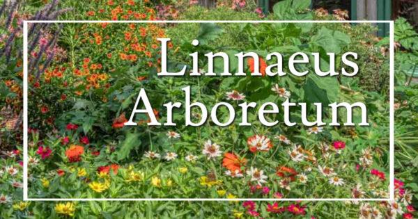 "flowers by a building with text ""Linnaeus Arboretum"""