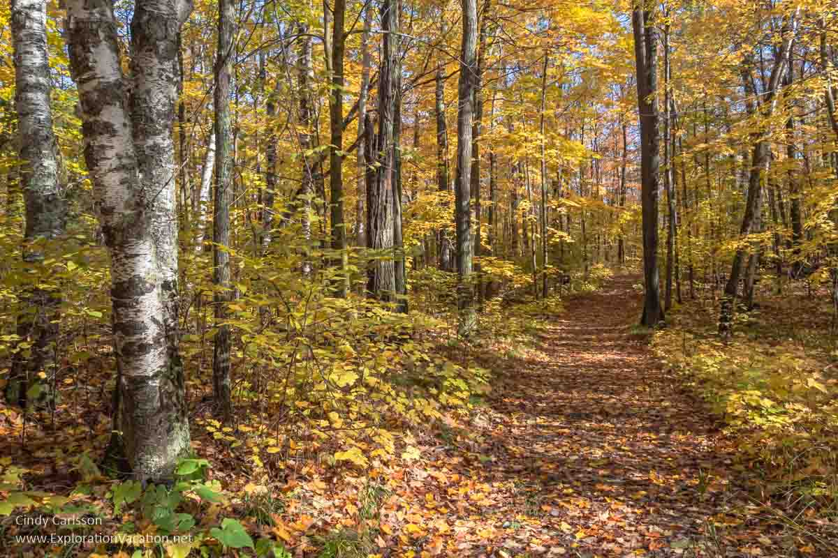 trail through a forest with yellow leaves
