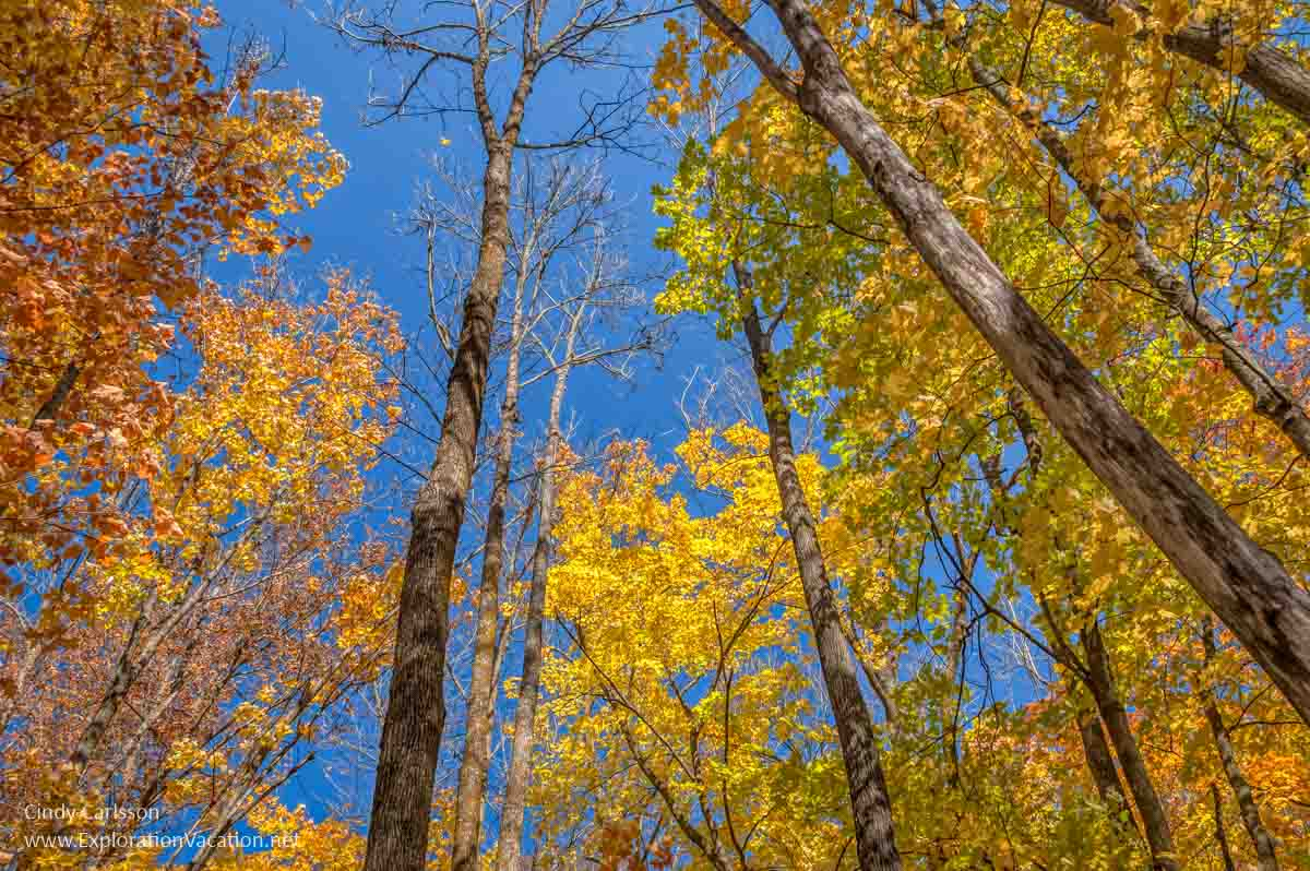 colorful tree tops