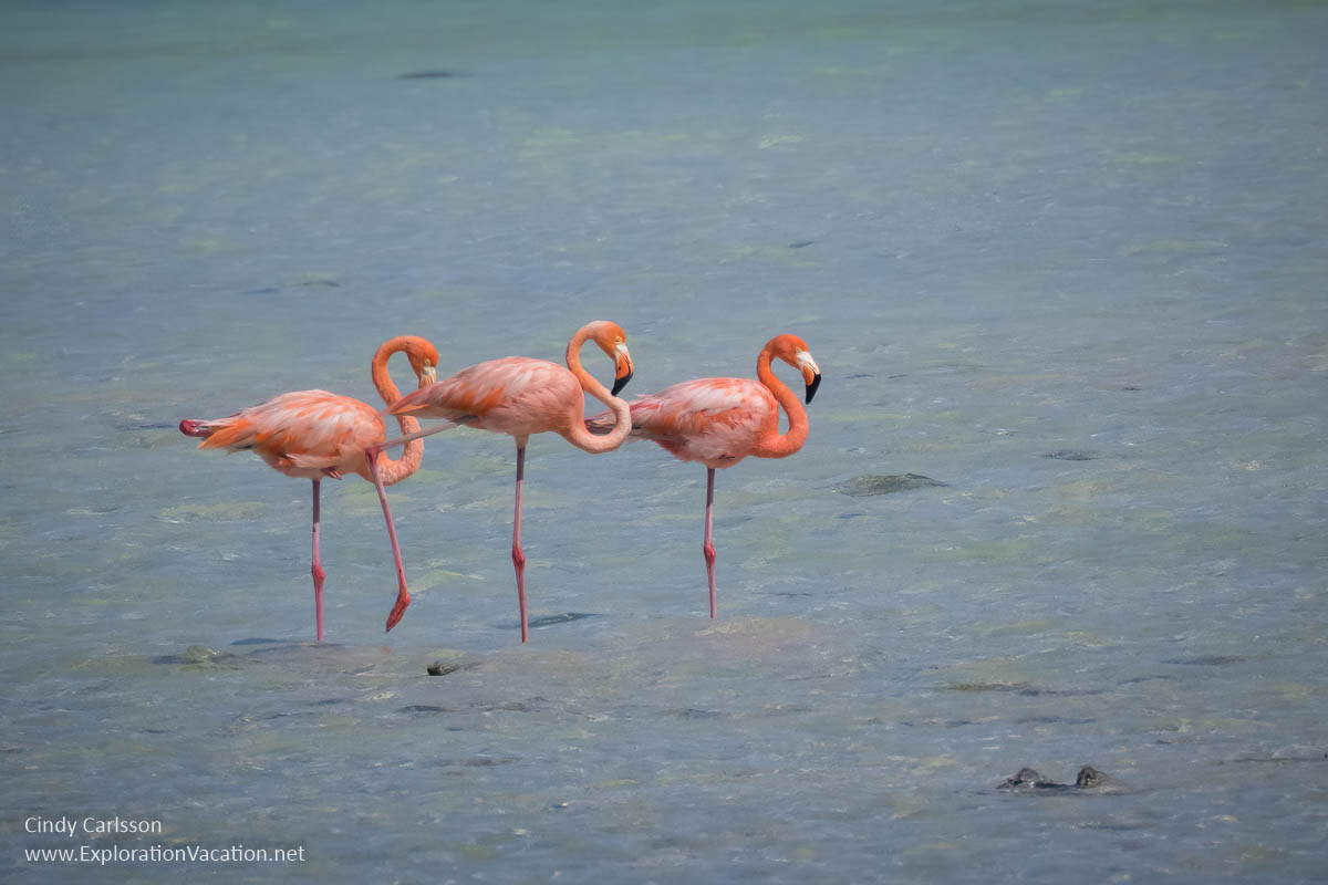 three flamingos in a lagoon