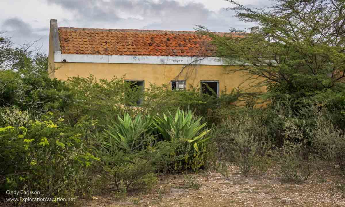 ruined building with plants on Bonaire