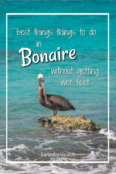 """pelican on rock surrounded by water with text """"best things to do on Bonaire without getting wet feet"""""""
