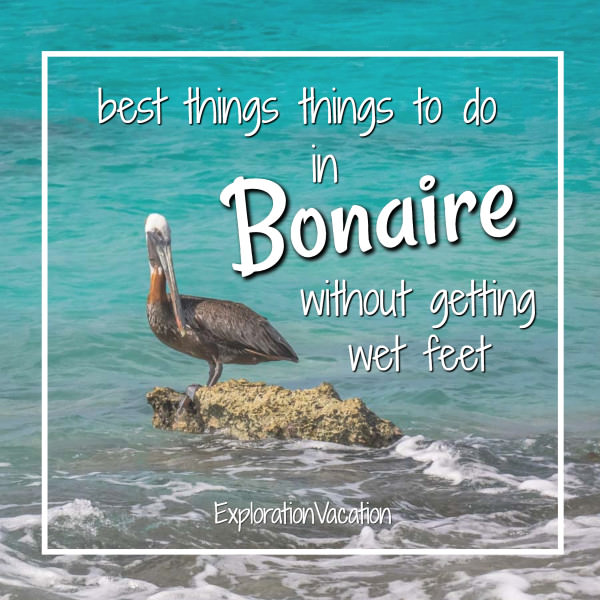 "pelican on rock surrounded by water with text ""best things to do on Bonaire without getting wet feet"""