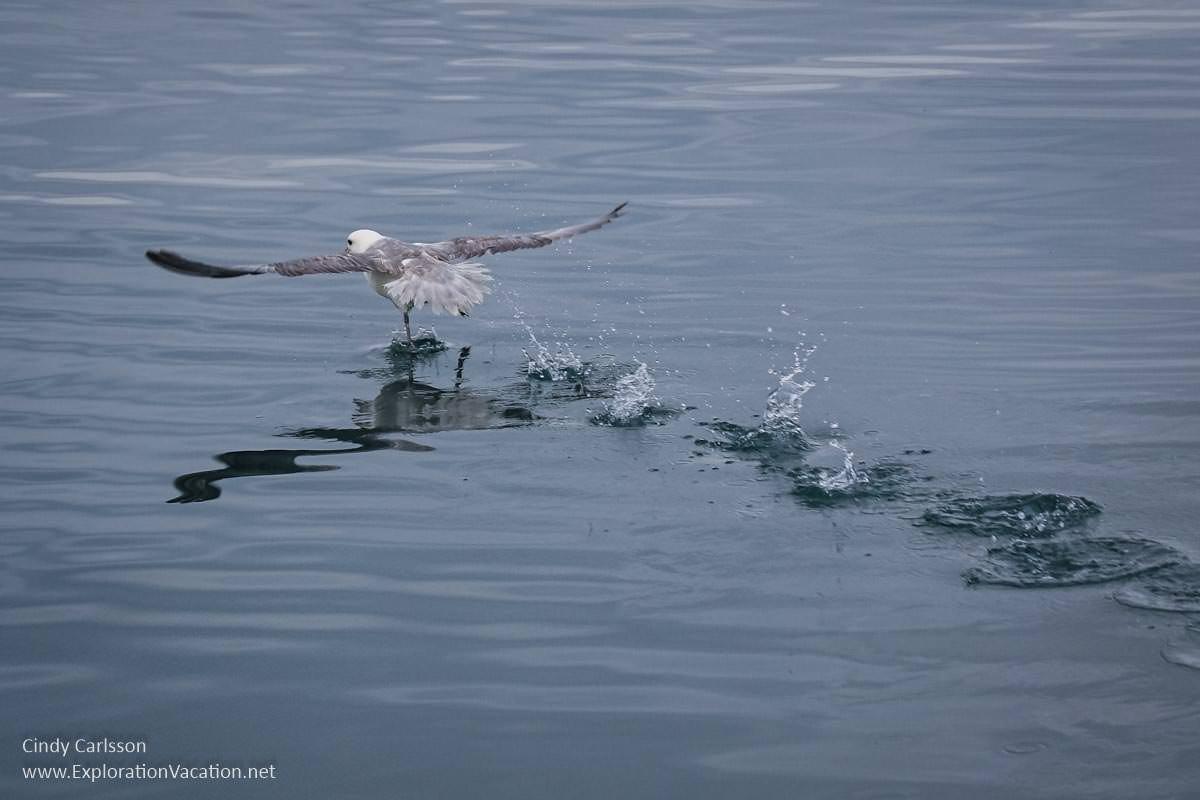 seabird taking flight