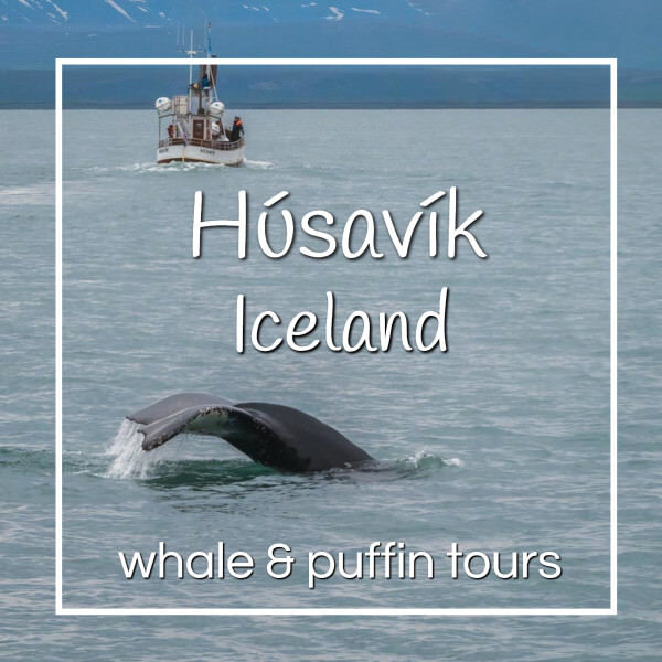 """whale with boat with text """"Husavik Iceland whale and puffin tours"""""""