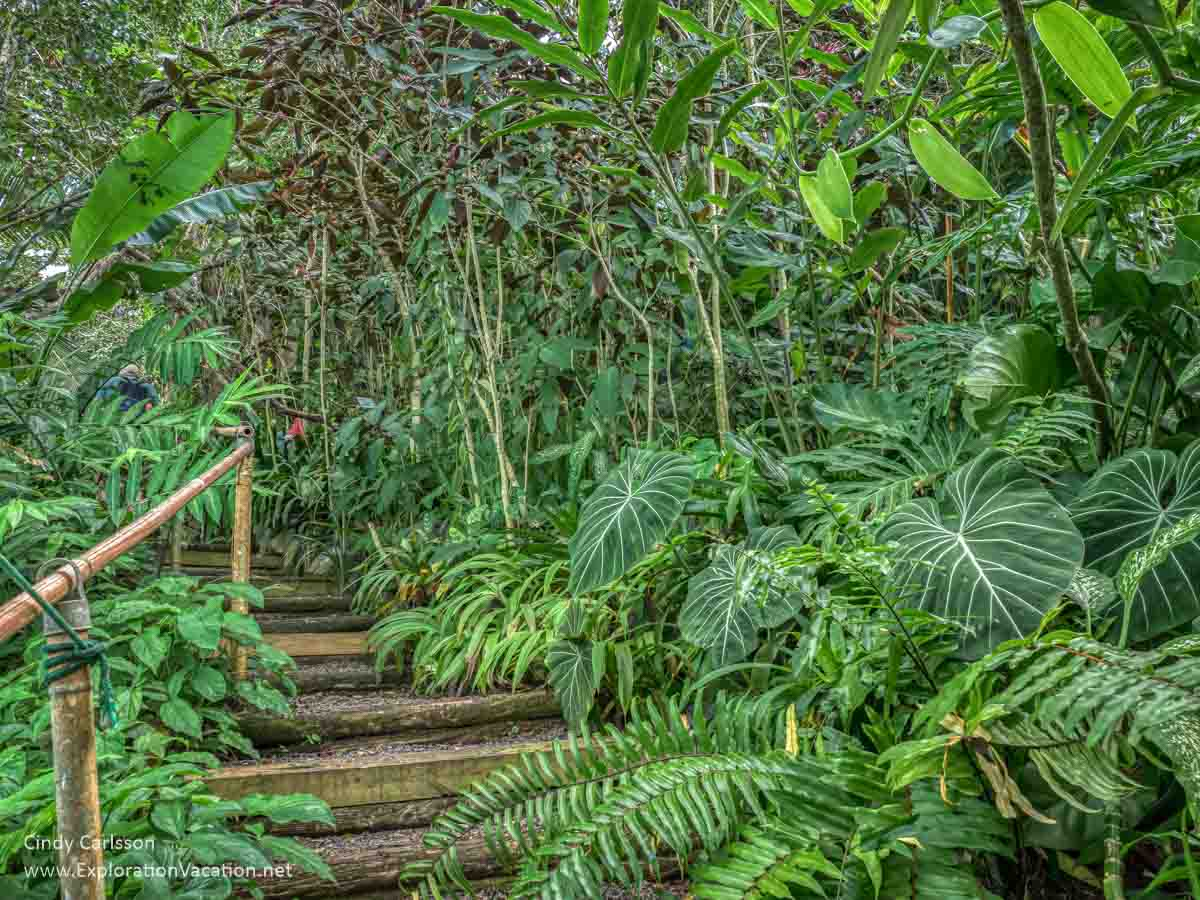 tropical plants along steps cut into a hillside