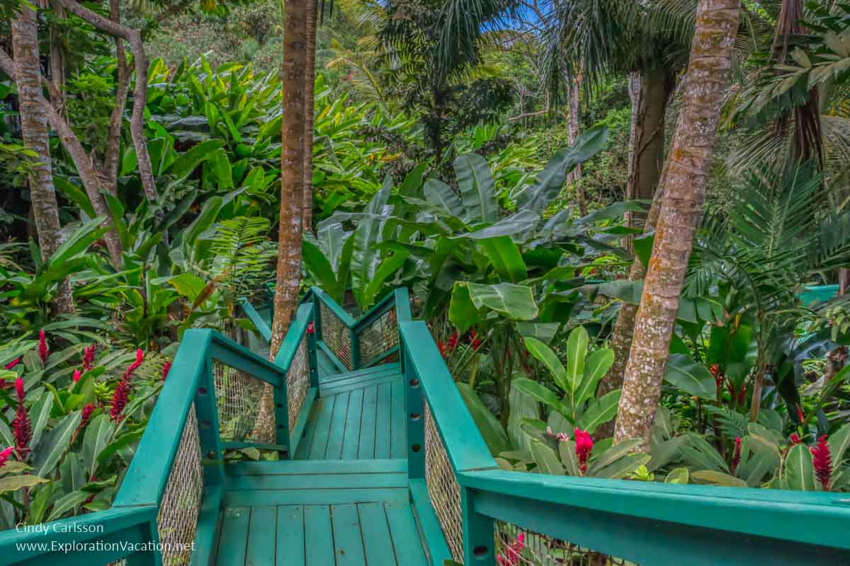 wooden walkway with stairs leading into tropical plants