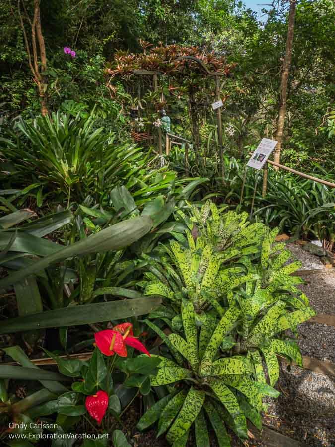 tropical plants along a walkway